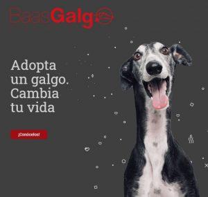 BaasGalgo1 1